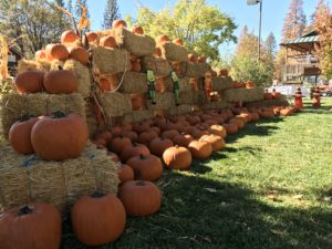 Falloween & Fall Festival